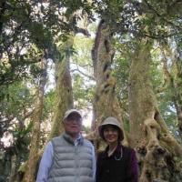囲碁とゴールドコーストと世界遺産スプリングブルック国立公園(3日目午前)