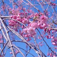 春うらら。