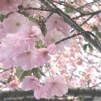 花散らしの風