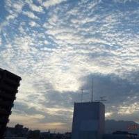 2016年08月17日(水曜日) 晴れ、猛暑日が続く。 (朝方)うろこ状の雲。。