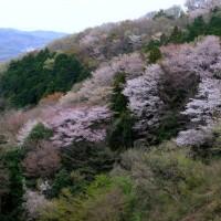 関東の吉野山シリ-ズ