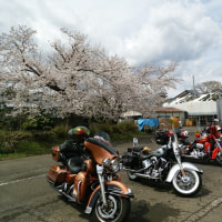 桜見たさの平日ツーリング