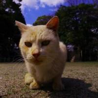 境内の猫  大津市