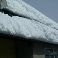 今回の雪2