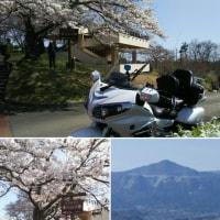 桜満開 美の山公園