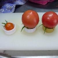 トマトは夏野菜だけど