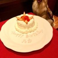 ルカのお誕生日WOOF