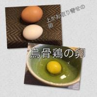 烏骨鶏の卵とポケモン