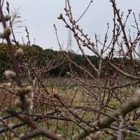 今年も桃畑で花見とバーベキュー(^^)