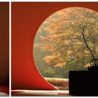 晩秋の北鎌倉の紅葉巡り(明月院)その1
