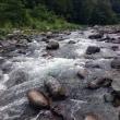 奥道志川、湖産系は釣り切られたか