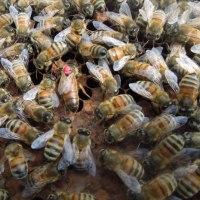 月曜日はミツバチの内検をする事にしています