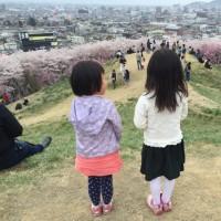 松本市 弘法山古墳の桜🌸