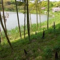 鶴見緑地チューリップ2017