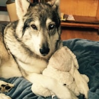 DIY 犬のノミ除けスプレー