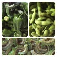 夏野菜フェスタ。
