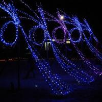 昭和記念公園 Winter Vista Illumination 2011年12月24日