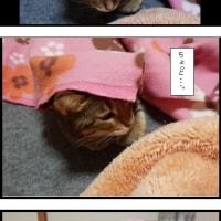 ベンガル猫、くるみの心を読んでみた。