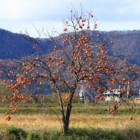 柿と大野城とキハ120
