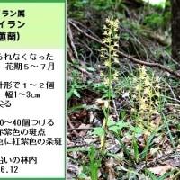 湯ノ丸山系のラン11
