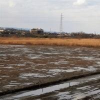 庄川右岸牧野大橋下流原野 自然破壊工事 進捗中        170219(日)