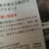 弘前・世界一長い桜並木