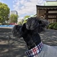 【亀戸天神】藤散歩♪♪