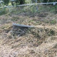 耕作放棄地からバラ園へ 2016.10.22