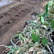トウモロコシの整理