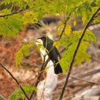 椋木とヒヨドリ