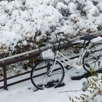 雪の京都で。。