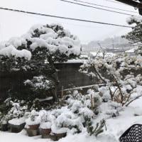 またまた雪が降る