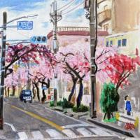 舎人の桜ー2017