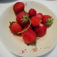 朝摘みイチゴ!