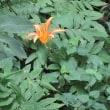 七ツ洞公園の「秘密の花園」と蓮