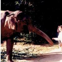 2017年3月4日(土) 旅の記憶 2  タイ ~象の森にて