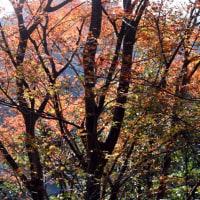 まだまだ美しい森の樹々