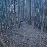 根尾松田から舟伏山