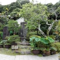 梅雨時の「光則寺」