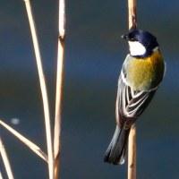 『春の鳥』 四十柄