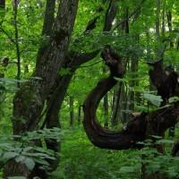 樹木が主役の写真ー14