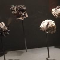 国立科学博物館・特別展