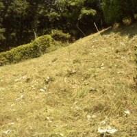 草刈りへ。