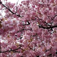 <02/18> お花見日和になりました