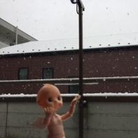 初雪でPぴ。
