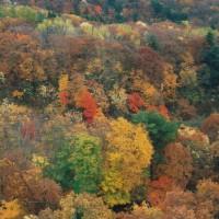 秋の深まりとともに・・・