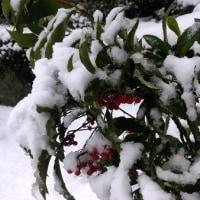 雪もっこりと赤い実