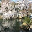 井の頭公園でお花見〜千本松牧場〜那須塩原温泉