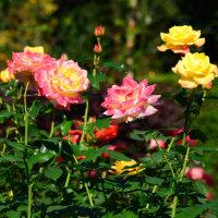 花菜ガーデンを訪ねて