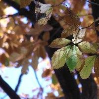 秋を留めて